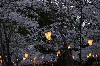 sagamikoirumirion-yozakurairumi